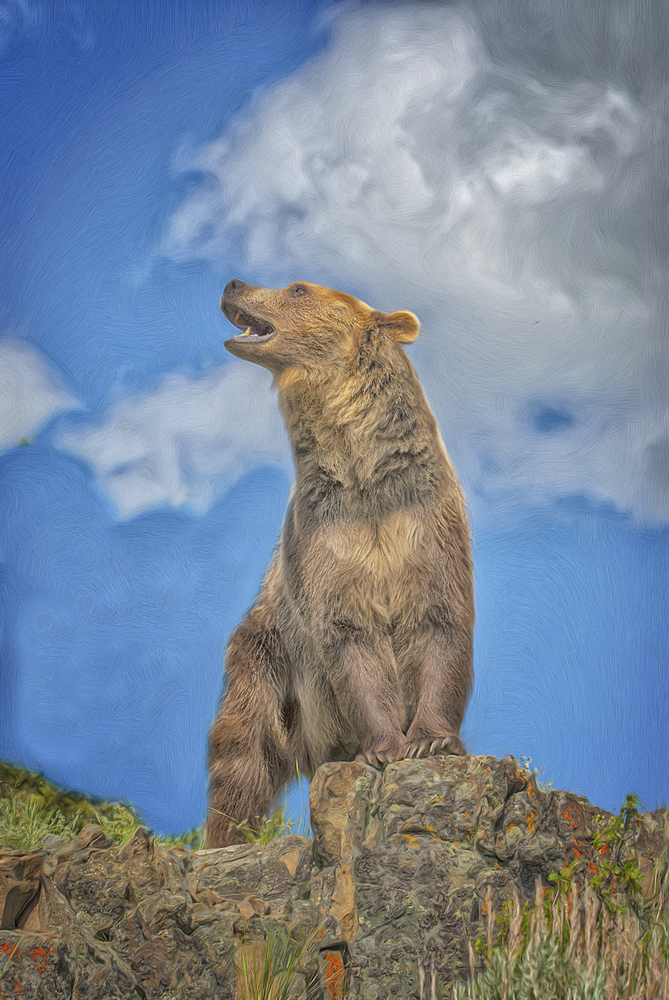animal_bear_photo_picture_404032612